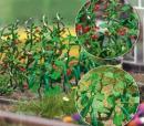 Модель кустов помидоров и огурцов.Пр-во BUSCH.Арт.1214.Масштаб НО (1:87).