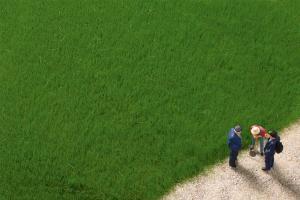 Модель волокон травы темно-зеленых высотой 4,5 мм.Пр-во Аухаген.Арт.75615.Масштаб НО (1:87).